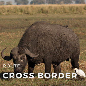 Cross Border - 28 days